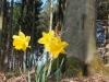 Bild 19 Blick auf Blumen