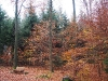 Bild 10 Blick in den Wald