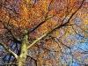 Bild 14 Blick in eine Baumkrone