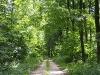 Bild 2 Blick auf einen Waldweg